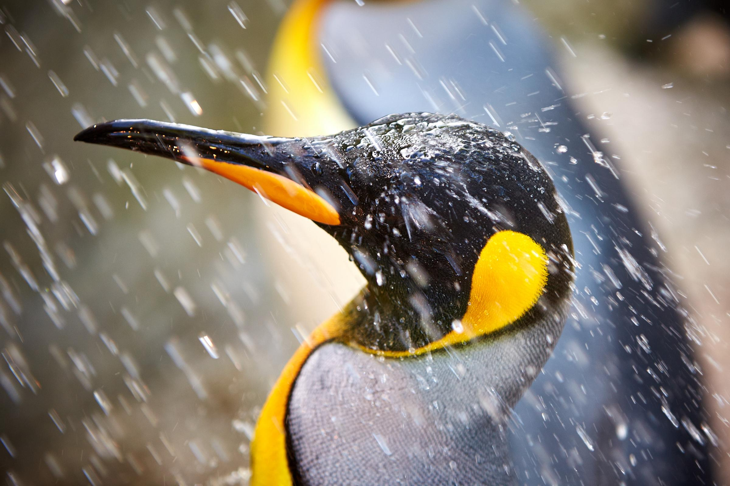 World Penguin Day at Birdland