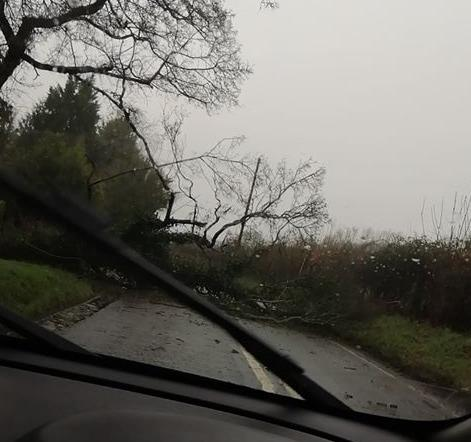Tree blocking the Stourport Road. PIC: Ame Clarke