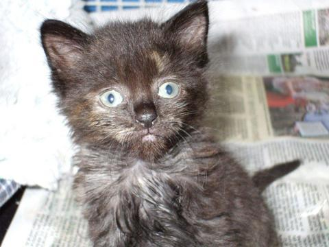 So cute: Button the abandoned kitten