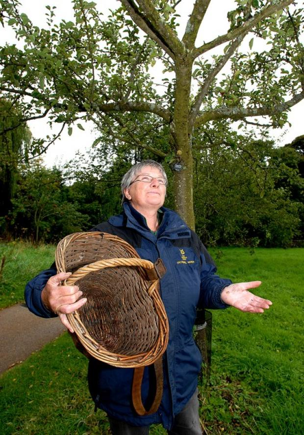 Snowshill Manor head gardener Linda Roberts is asking people to donate their apples for a fruit festival after this year's wet summer wiped out the crop.