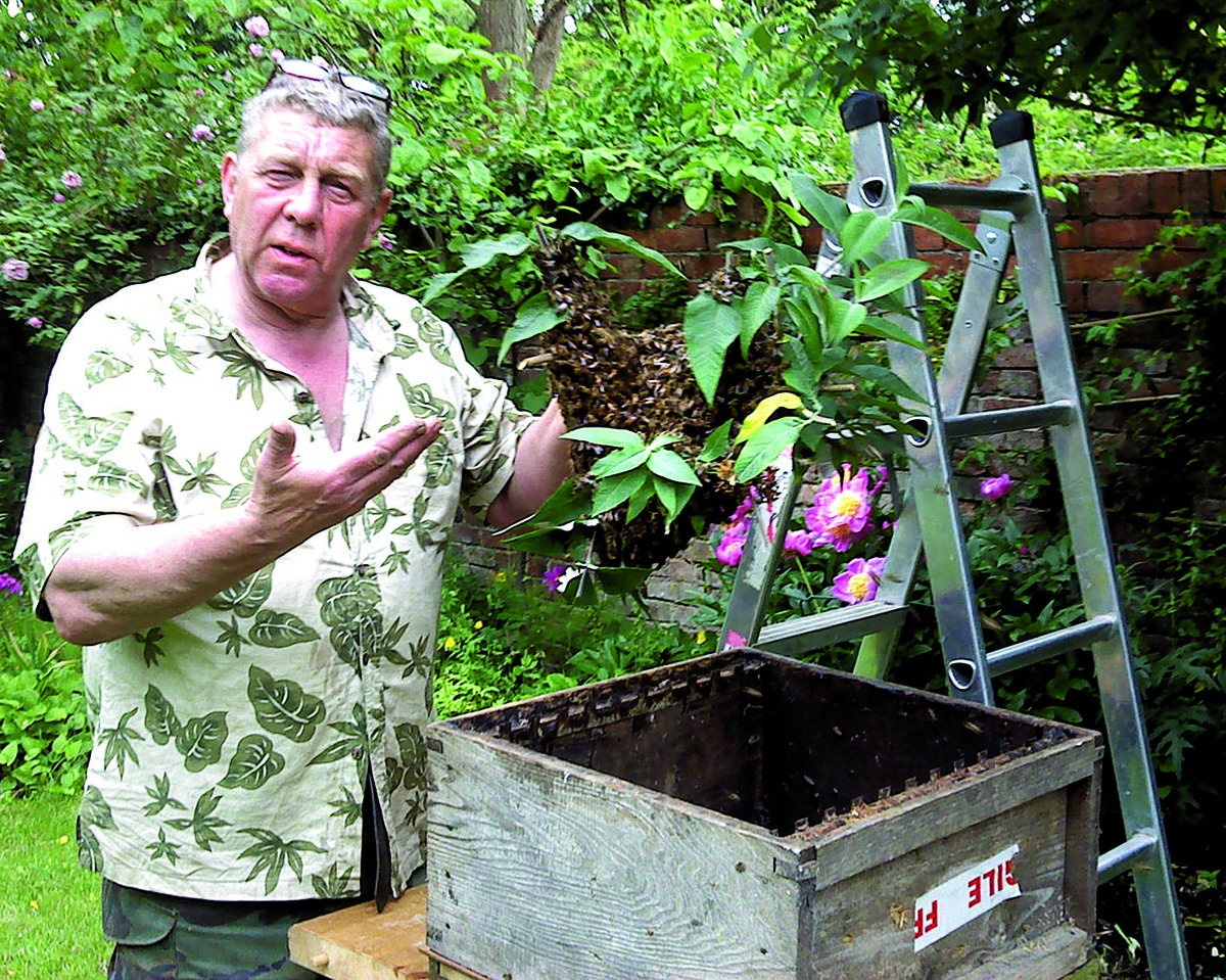 ALIVE AND KICKING: Pest controller Michael Pincher with some of the thousands of bees he has in his garden.