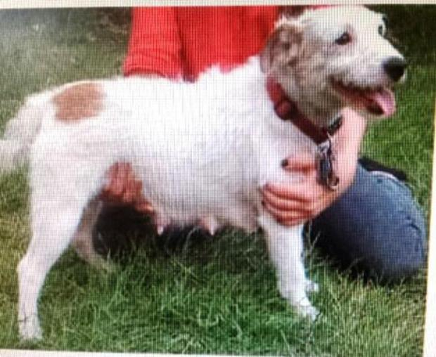 Beloved pet dog stolen from car near Worcester