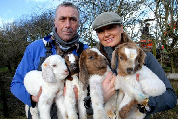 Cotswold Journal: Cotswold Farm Park have new Boer Goat quads. From left - Andy Walker, livestock display supervisor and Mandy Hall, display team.