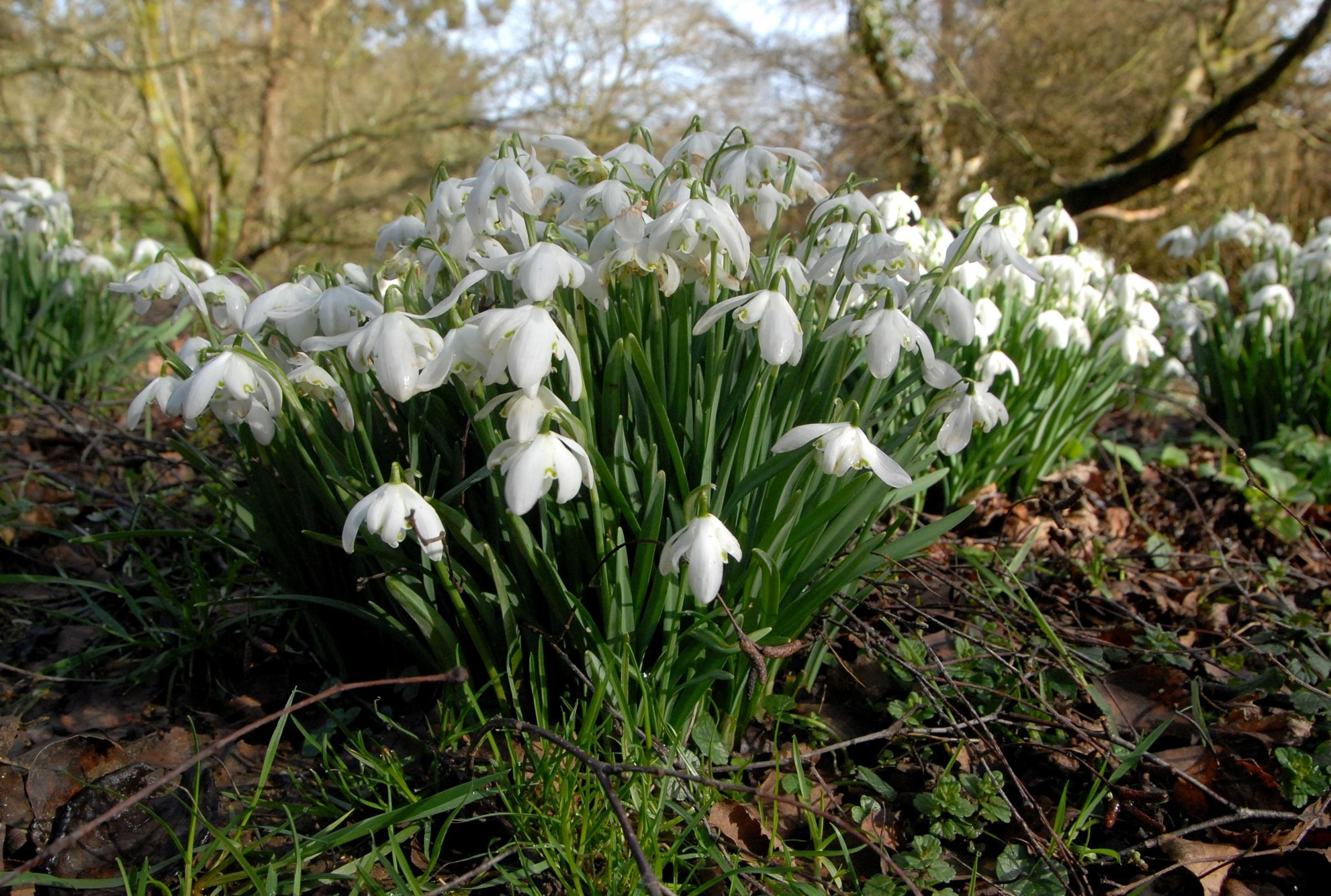First signs of Spring at Batsford