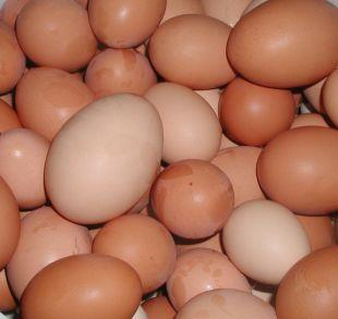 Cotswold Journal: Shopkeepers ban youngsters from buying eggs