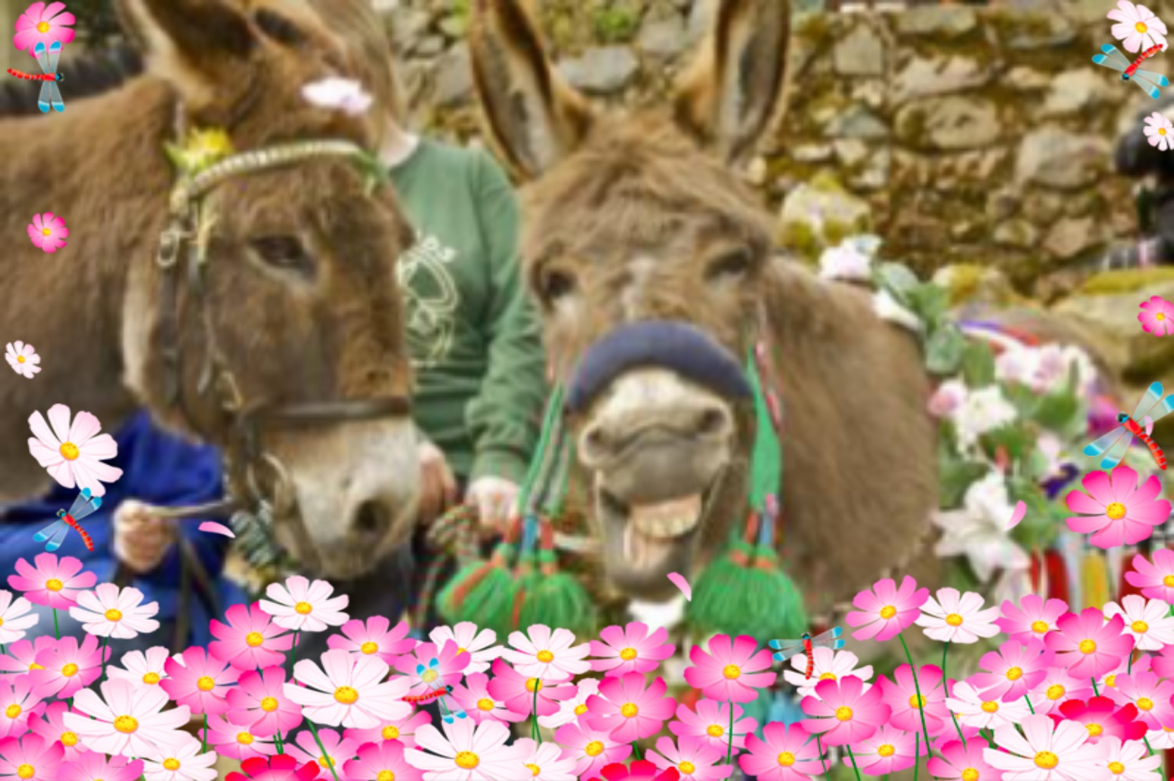 Meet the Dinkey Donkeys at the Annual Mayday Blessing